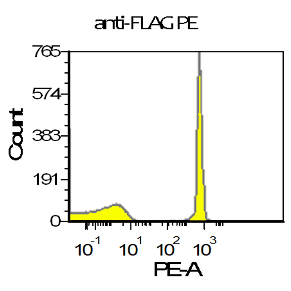 Flag Tag vTag Antibody L5 validation using positive control antibody binding beads demonstrates adequate resolution of the positive bead population from control. Measurement was performed on a Beckman Coulter CytoFlex equipped with a 561nm laser.